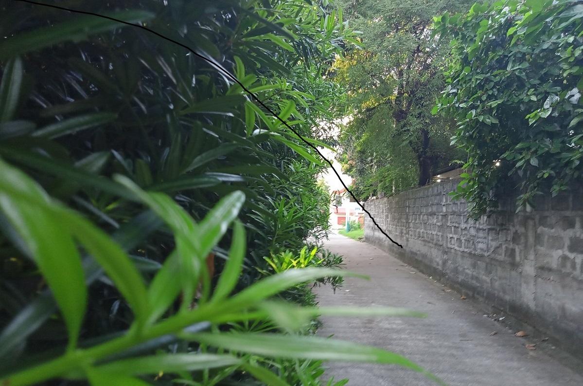 Contoh Foto Hasil Kamera Realme C12