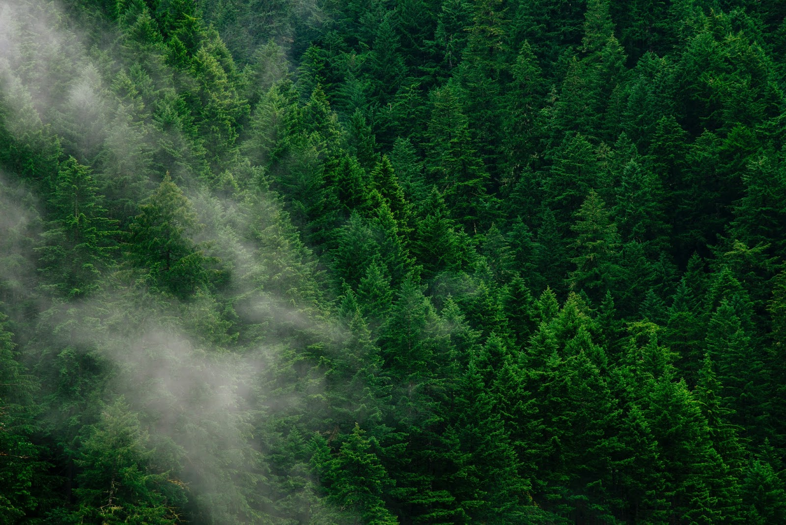 Ξεκινά η αναμόρφωση και κατάρτιση δασικών χαρτών στην Ξάνθη