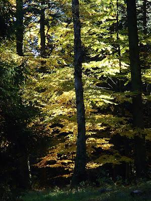 grzyby 2016, grzyby w październiku, grzyby w rezerwacie, rezerwat Kozie Kąty, kolory jesieni, muchomor czerwony Amanita muscaria, grzybówka Mycena,  rulik nadrzewny [groniasty] Lycogala epidendrum,  Galaretnica mięsista Ascocoryne sarcoides