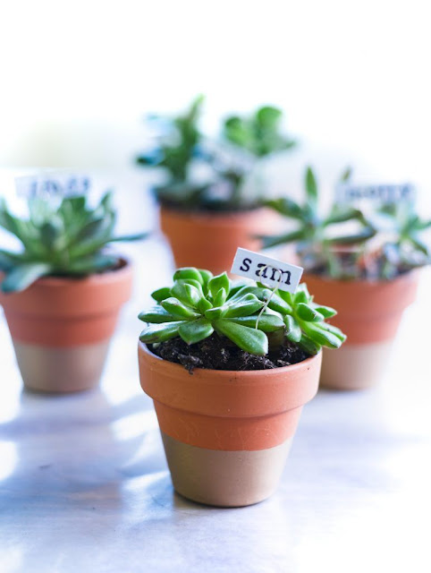How to make easy succulent place card holders in mini terra cotta pots.