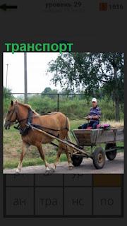 лошадь запряжена в телегу, гужевой транспорт