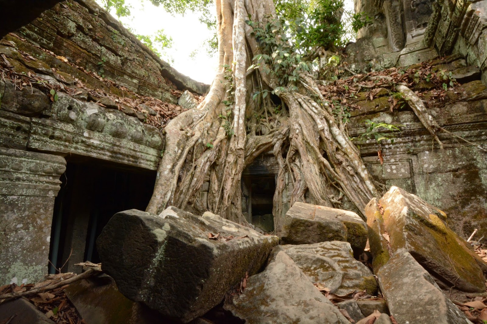 angkor wat cambodia top tips travel holiday vacation trees