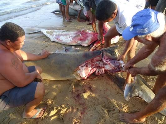 Resultado de imagem para imagens de pescadores da Barra de Caravelas