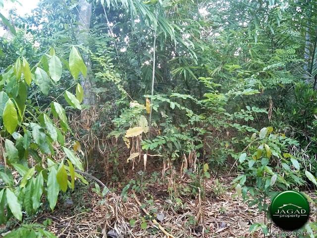 Tanah Disewakan jalan Godean Km 17