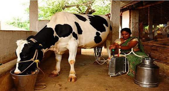 Dairy development in Rajasthan