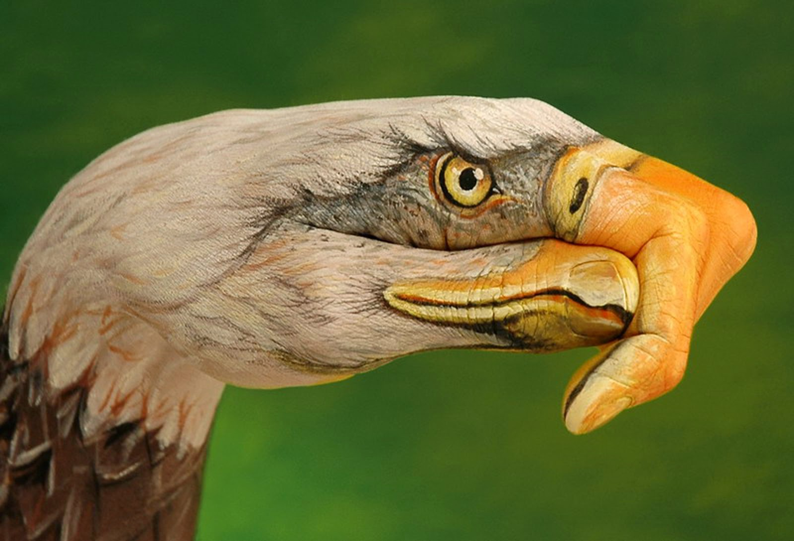 Eagle flying hand painting by Guido Daniele