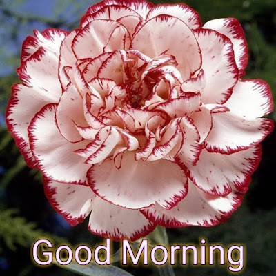 Good Morning Photo, Good Morning Photo Hd, Good Morning Photo Download,  Good Morning New Photo,  Photo Good Morning, Good Morning Hd Photo, Good Morning Rose Images,  Good Morning Flowers Photo,  Whatsapp Good Morning Photo,  Love Good Morning Photo