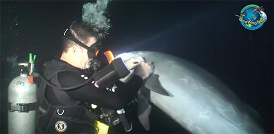 Mergulhador ajuda golfinho 1