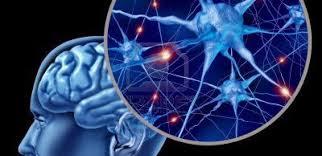 Definición neurociencia antecedentes
