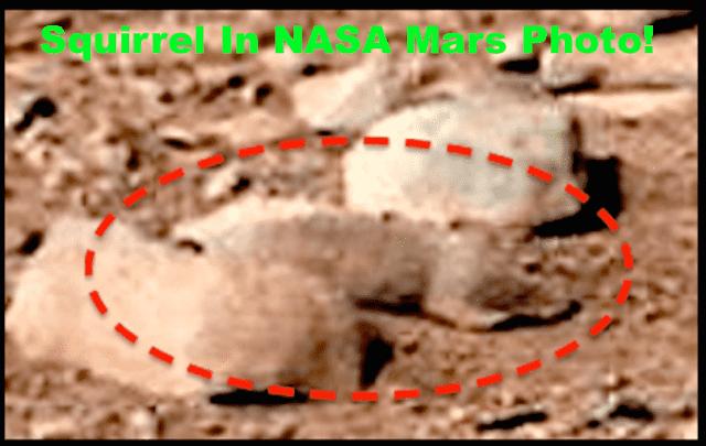 Imagen ampliada del roedor sobre la superficie de Marte