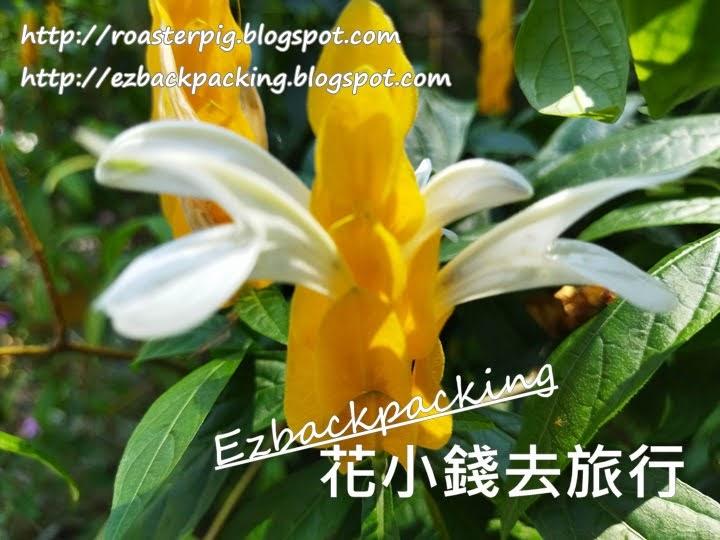 香港黃鴨咀花