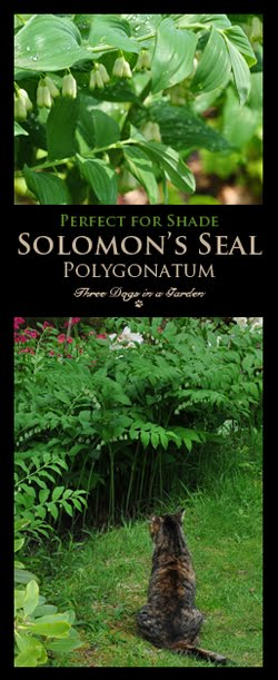 Made for the Shade: Solomon's Seal