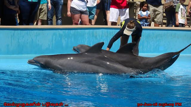 Dolphin Exhibit in Las Vegas