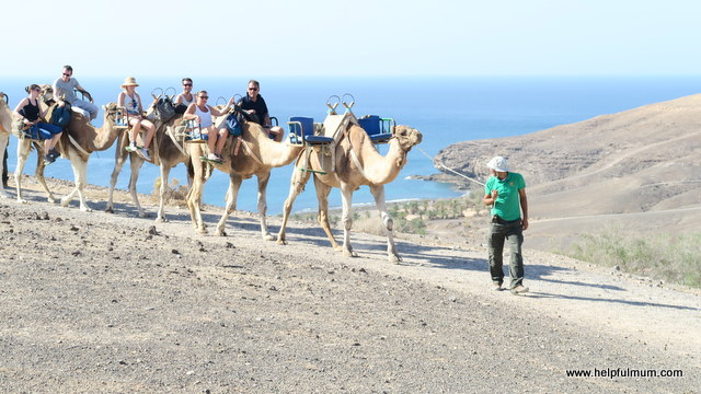 Camel riding in Fuerteventura