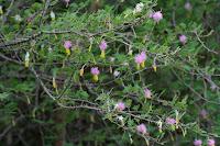 aroma-especie-invasora-manati