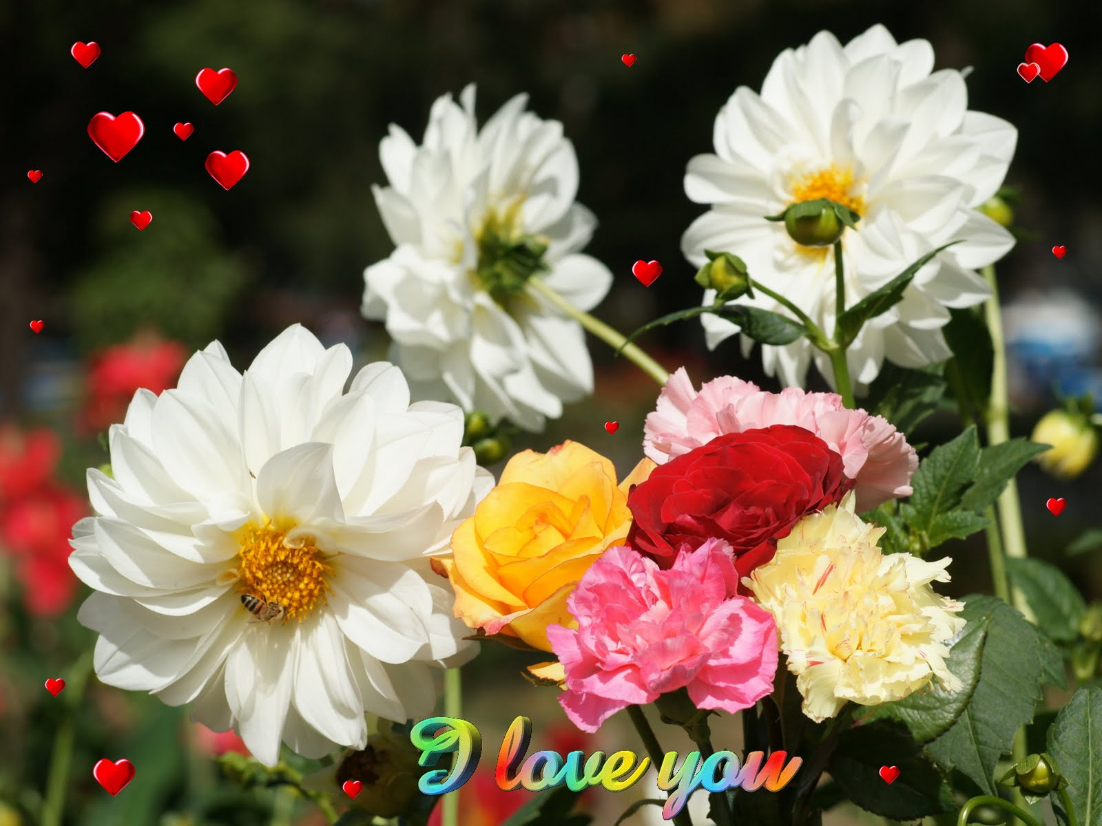 Hd Blogger Wallpapers: New And Nice Flowers
