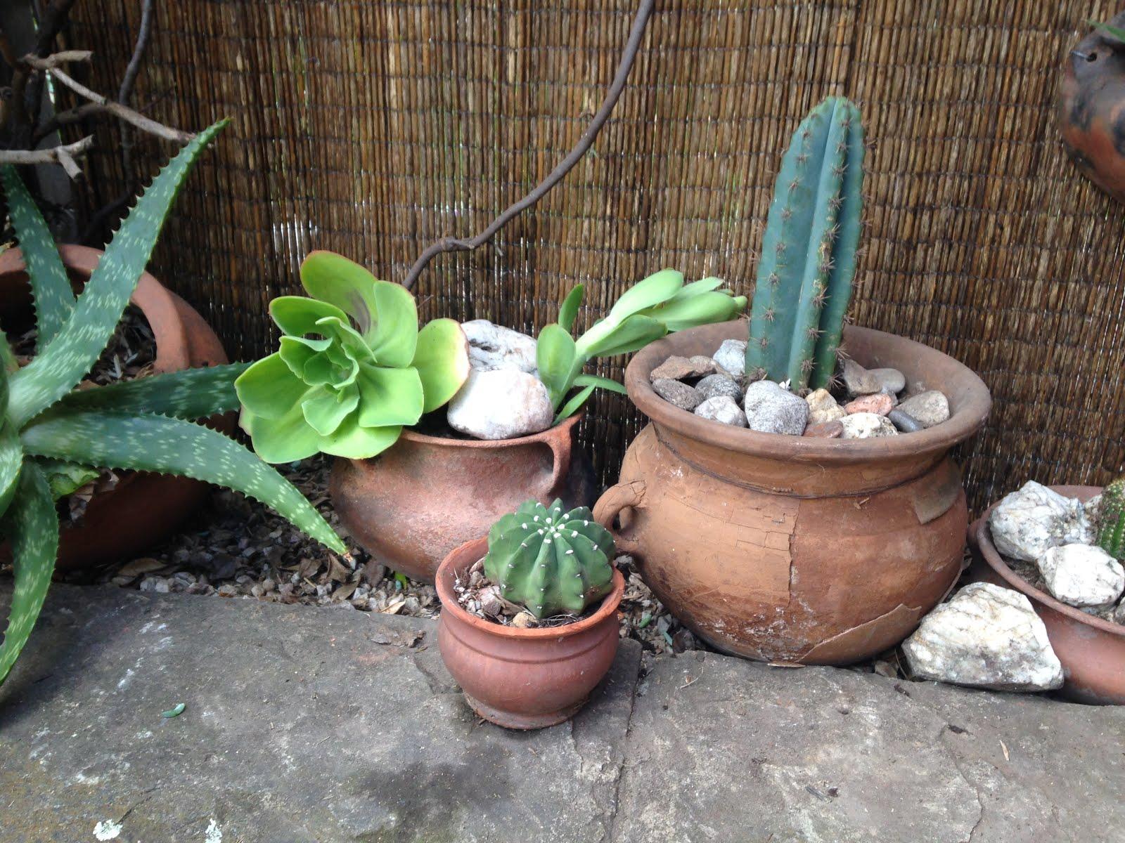 Enviar por correo electr nico escribe un blog compartir - Jardines con cactus y piedras ...