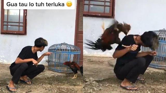 Viral Aksi Pemuda Curhat pada Ayam akibat Ditinggal Kekasih, Rela Dipatuk sampai Berdarah-darah
