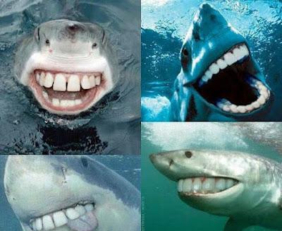 Lustige Bilder Fische lachen