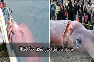 شاهد بالفيديو : اكتشفوا وجود حبار عملاق في البحر فشاهد ما فعل