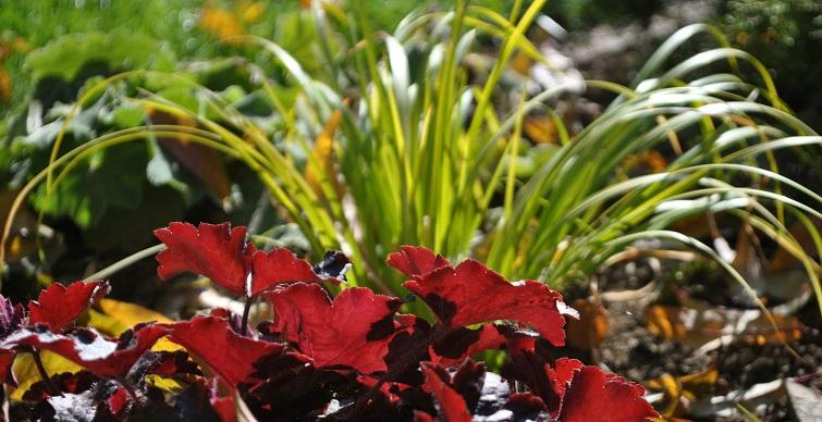 Gestalten mit Pflanzen Rot und Gelb