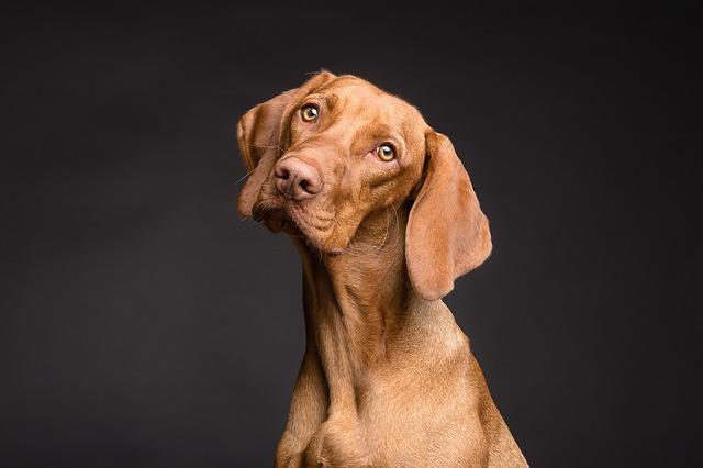 dog essay