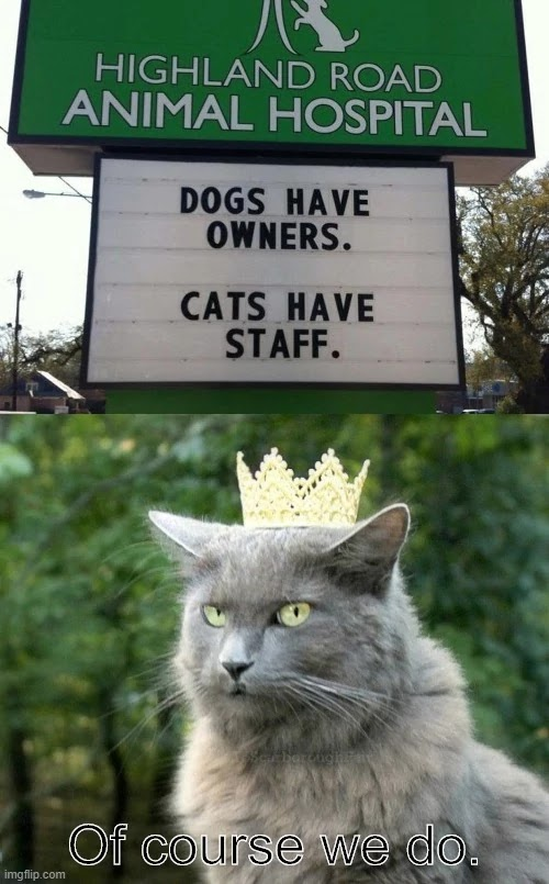 dogs-have-owner-and-cats-have-staff-funny-memes