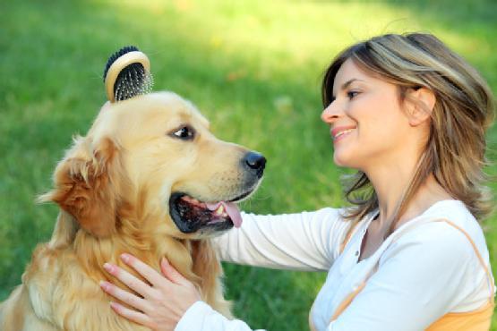 Tại sao chó hay nhìn chủ chằm chằm?