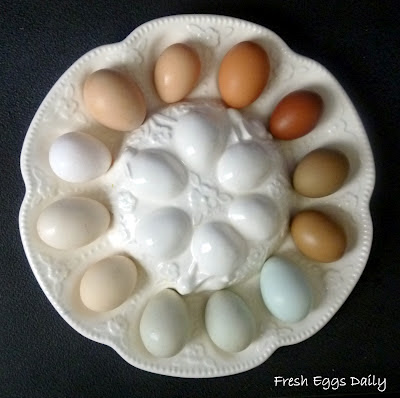 Rainbow Chicken Eggs Related Keywords & Suggestions