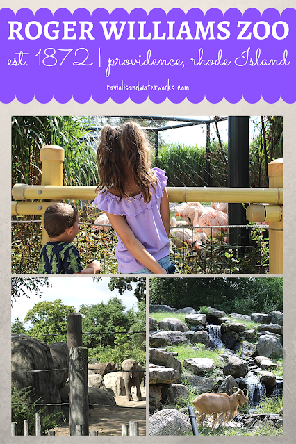 honest review and what animals are in the roger williams zoo in ri