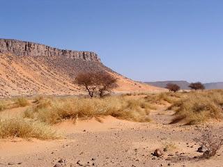 Hamada w Algierii autor: Florence Devouard