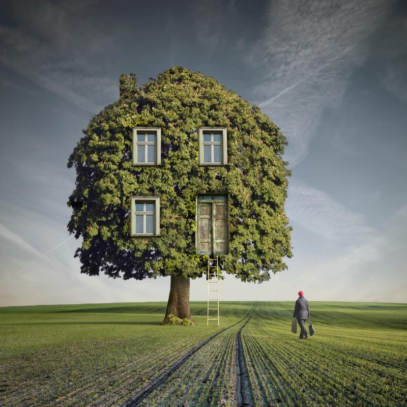 construindo casa na árvore
