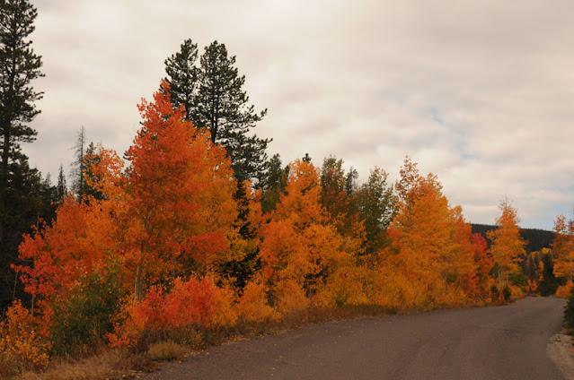 Snowy Range autumn foliage