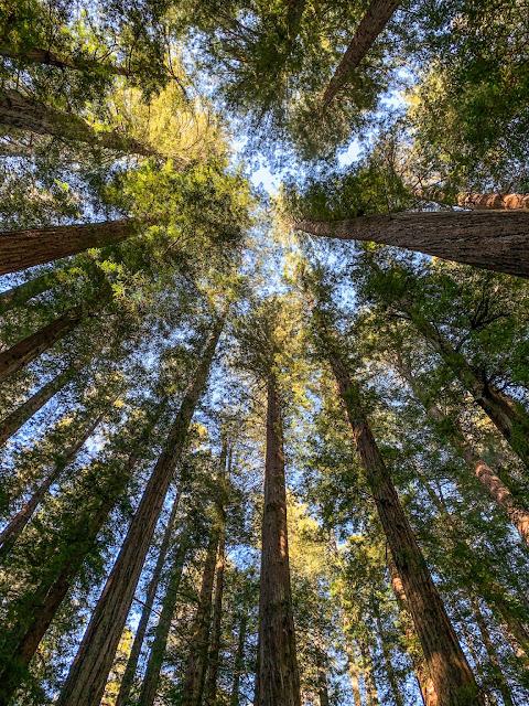 California Redwoods; Tiny Trailer camping; Safari Condo Alto