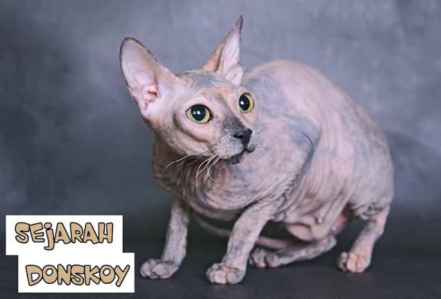 Sejarah Kucing Don Sphynx