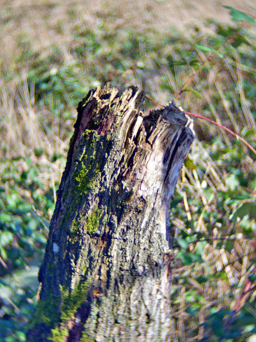 #314 TV LENS f1.4 25mm - Baumstumpf