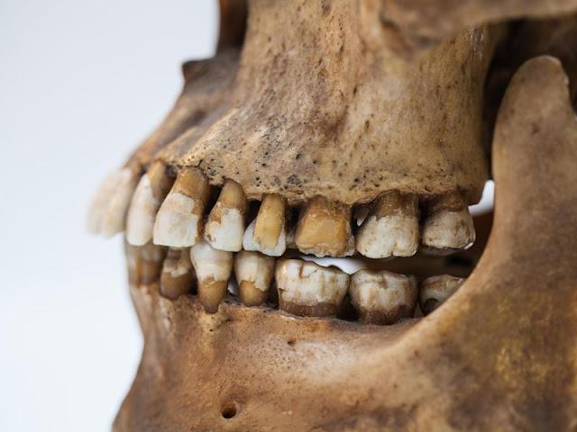 Prehistoric teeth give up their secrets