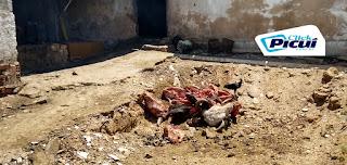 Matadouro público de Picuí envergonha terra da carne de sol