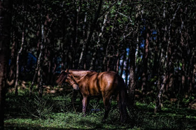 Equine Grazing at Wright Park Horse Stable Hill Baguio City Philippines
