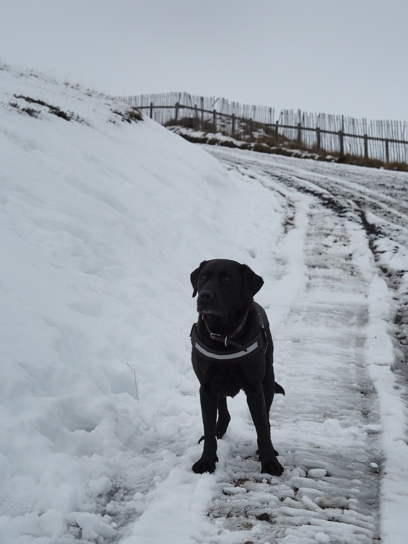 Harley in the snow at Glenshee ski centre