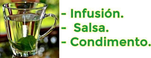Formas de consumir albahaca para mejorar la salud