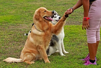 Choose the Training Type a Dog