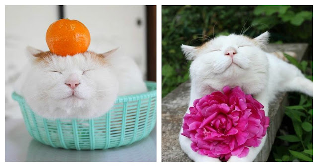 'Zen Cat' Shironeko Can Teach Us A Thing Or Two About Being Blissfully Happy