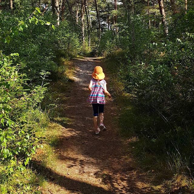 Unsere 11 besten Ausflugstipps für die Ostseeküste Nordjütlands. Der Koldkaer skov an der Ostseeseite Jütlands ist ein wunderschönes Ausflugsziel mit Wald und einem Weg zum Strand zwischen Hou und Hals.