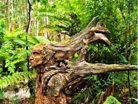 10 Gambar Foto Pohon Lucu Dan Unik Gambar Top 10