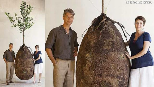 Organikus zsák segítségével fa lesz az elhunyt testéből