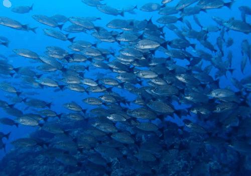 Massive fish die off Costa Rica & Michigan Cano-Island-Snorkeling-fish-Fun
