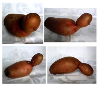 un cartof cu cap