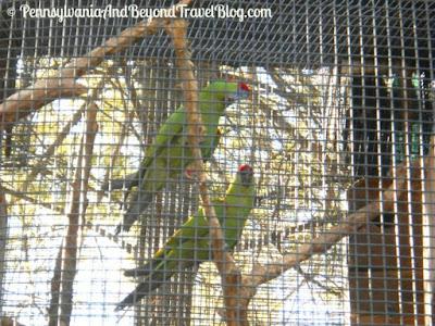 ZooAmerica North American Wildlife Park - Parrots