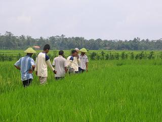 Biodiversitas di Sektor Pertanian Sebuah Tantangan